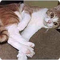 Adopt A Pet :: Paul - Lombard, IL