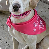 Adopt A Pet :: Holly - Tipp City, OH
