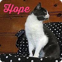 Adopt A Pet :: Hope - Sherman Oaks, CA