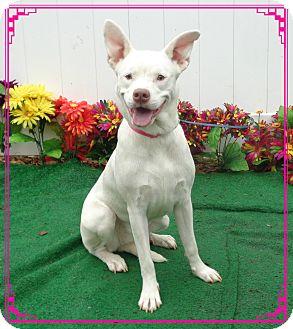 Shepherd (Unknown Type) Mix Dog for adoption in Marietta, Georgia - BELLA