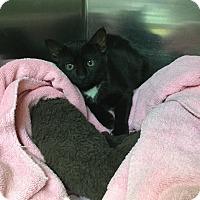 Adopt A Pet :: Esmeralda - Richboro, PA