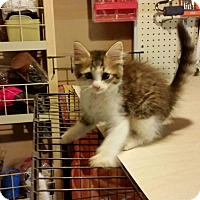 Adopt A Pet :: Irwin - Fairborn, OH