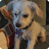 Adopt A Pet :: Kelsey - Los Angeles, CA
