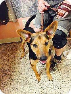 German Shepherd Dog Mix Dog for adoption in ST LOUIS, Missouri - Estella