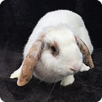 Adopt A Pet :: Aja - Watauga, TX