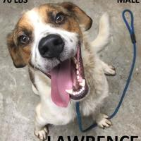 Shepherd (Unknown Type) Mix Dog for adoption in Tahlequah, Oklahoma - Lawrence