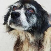 Adopt A Pet :: Wanda - Toccoa, GA