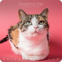 Adopt A Pet :: Persephone - Sheboygan, WI