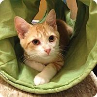 Adopt A Pet :: Casey - Richmond Hill, ON