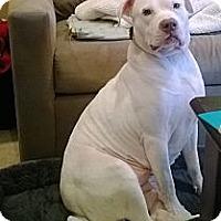 Adopt A Pet :: Elsie - Rockaway, NJ