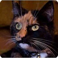 Adopt A Pet :: Kashmir and Saribi - Cincinnati, OH