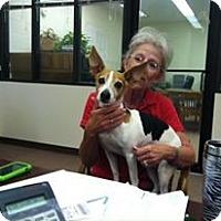 Adopt A Pet :: Tango - Childress, TX