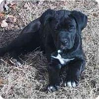 Adopt A Pet :: Rufus - Chandler, IN