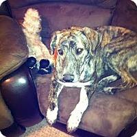 Adopt A Pet :: NELLIE-JJ (AZ) - Roundup, MT