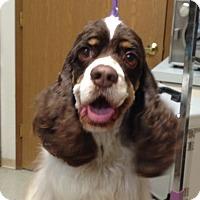 Adopt A Pet :: NESTLE - Tacoma, WA