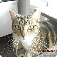 Adopt A Pet :: Toby - Riverside, RI