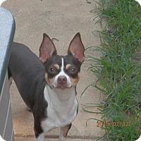 Adopt A Pet :: Jerry-Lee - Clarksville, TN