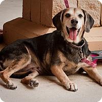 Adopt A Pet :: Ellie Mae - Holmes Beach, FL
