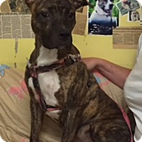 Adopt A Pet :: max - Henderson, KY
