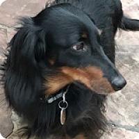 Adopt A Pet :: Buddy Bouillon - Houston, TX