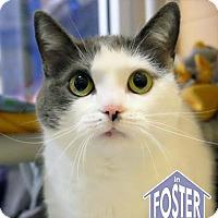 Adopt A Pet :: Polly - Ann Arbor, MI