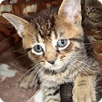 Adopt A Pet :: Napoleon - Lebanon, PA