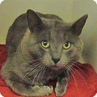 Adopt A Pet :: Perry - Lloydminster, AB