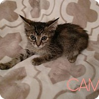 Adopt A Pet :: CAMILLA - Lawton, OK