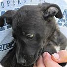 Adopt A Pet :: Megrez