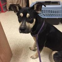 Mixed Breed (Medium) Mix Dog for adoption in Myrtle Beach, South Carolina - Honeysuckle
