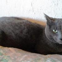 Adopt A Pet :: Saul *Courtesy listing* - Florence, AL
