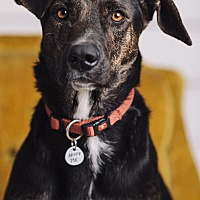 Adopt A Pet :: Rowan - Portland, OR