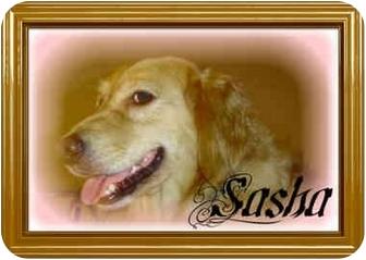 Golden Retriever Mix Dog for adoption in salisbury, North Carolina - Sasha