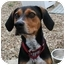 Photo 2 - Coonhound (Unknown Type)/Foxhound Mix Puppy for adoption in Berea, Ohio - JJ