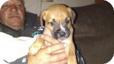 Golden Retriever Mix Puppy for adoption in Evergreen, Colorado - Garbo