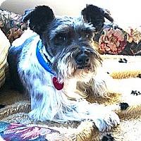 Adopt A Pet :: Mickey - North Benton, OH