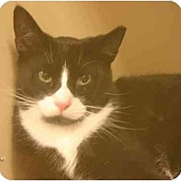 Adopt A Pet :: Cody - Jenkintown, PA