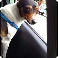 Adopt A Pet :: Ivy - Concord, CA