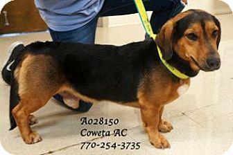 Basset Hound Mix Dog for adoption in Walden, New York - Clyde