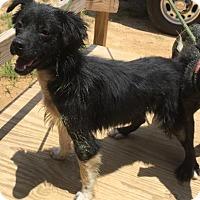 Adopt A Pet :: Kaden - Livingston, TX