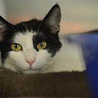 Adopt A Pet :: Lily162011 - Atlanta, GA