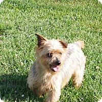 Adopt A Pet :: Dunkin - Prole, IA