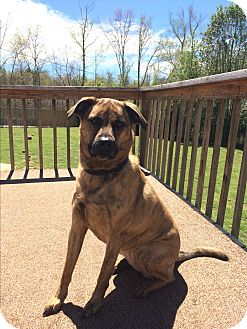 Mixed Breed (Large) Mix Dog for adoption in Greenville, South Carolina - Edith