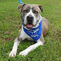 Adopt A Pet :: Courtesy: Blue - McCormick, SC
