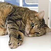 Adopt A Pet :: Ebenezer - Topeka, KS