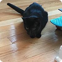 Adopt A Pet :: Salem - Berkeley Hts, NJ