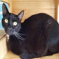 Adopt A Pet :: SPOT - Fairfield, CA