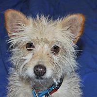 Adopt A Pet :: Pinky - San Francisco, CA