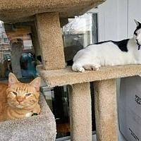 Adopt A Pet :: Precious - Kohler, WI