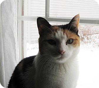 Calico Cat for adoption in Rochester Hills, Michigan - Maud